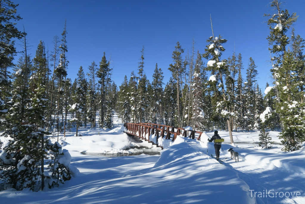 Cross Country Skiing in Lodgepole Pine Forest