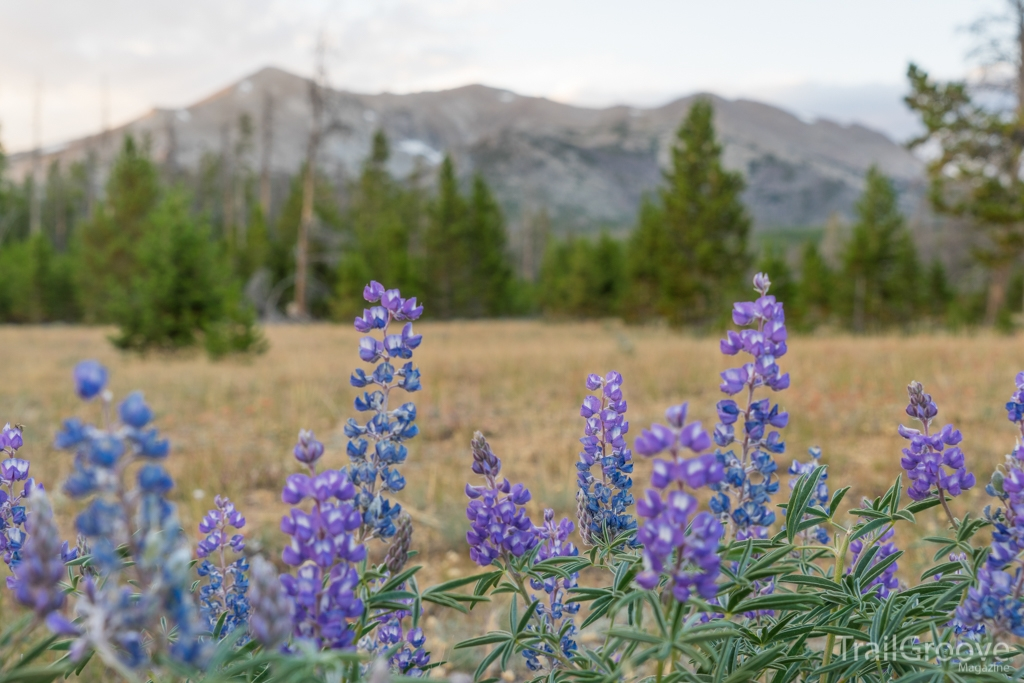 Hiking in the Wind Rivers and Summer Lupine