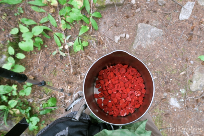 How to Pick Berries while Hiking